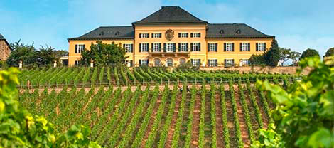 Sur la route des vins